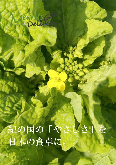 メリーさんの野菜畑 私たちの想い